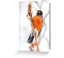 American Robin watercolor art Greeting Card