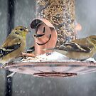 Frigid Finches at Feeder by Mikell Herrick