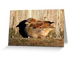 Sparrow in the Sun Greeting Card
