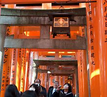 red torii gates by photoeverywhere