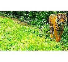 Orange Prowess Photographic Print