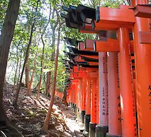 line of torii gates by photoeverywhere
