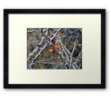 ©NS Red Berries IA Framed Print