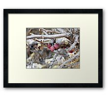 ©NS Red Berries IIA Framed Print