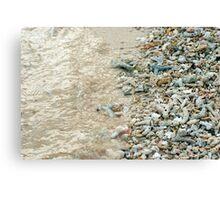Broken coral on a beach Canvas Print