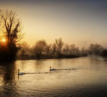 Swan Sunrise by Tobias King