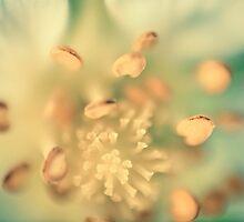 Flower 2 by elspiko