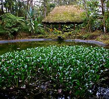 Sachatamia Lodge Pond In Mindo Ecuador by Al Bourassa
