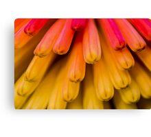 Macro Flower Cluster 1 Canvas Print