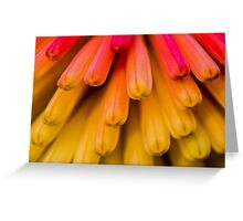 Macro Flower Cluster 1 Greeting Card