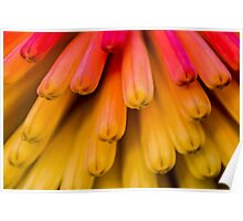 Macro Flower Cluster 1 Poster