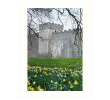 Daffodils in the garden at Cardiff Castle Art Print
