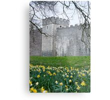 Daffodils in the garden at Cardiff Castle Metal Print