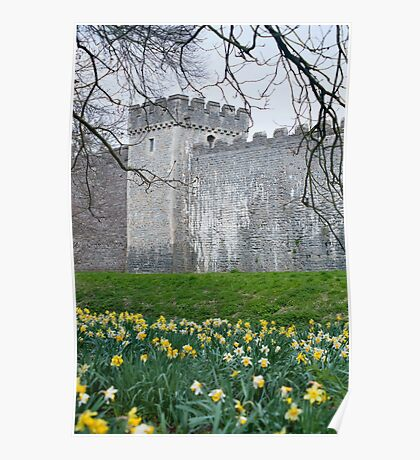 Daffodils in the garden at Cardiff Castle Poster