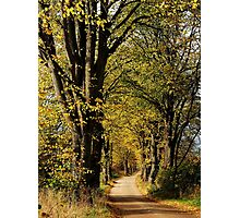 Walking on an old lime-tree lane Photographic Print