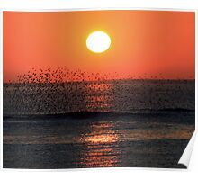 Starling sunset Poster