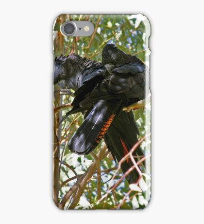 Red-tailed Black Cockatoos iPhone Case/Skin
