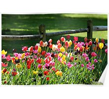 Tulips in the Country Poster