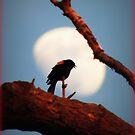 Waxing Moon and RedWinged Blackbird by TrendleEllwood