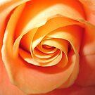 Bloom by shalisa