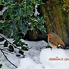 Robin Christmas Card by Photography  by Mathilde