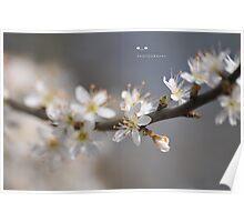 """ Blossom White In The Sunlight "" Poster"