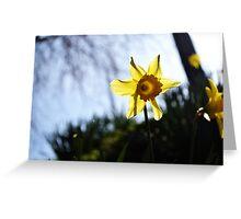 Daffodil Sun Greeting Card