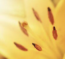 Sunshine Lily by emajgen