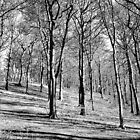 Black And White Woods by SamanthaMirosch
