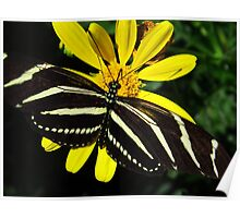 Zebra Butterfly on Yellow Poster