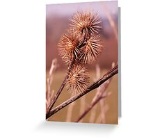 A group of thistle heads Greeting Card