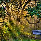 Empty Bench Early Morning by Roger Passman