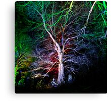 At the bottom of the garden.... Canvas Print