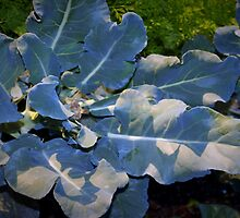 Newly trimmed broccoli by ♥⊱ B. Randi Bailey
