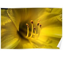 Lilly Detail II Poster