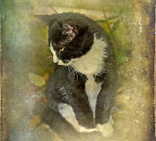 Tuxedo Cat Wearing Spats by MotherNature2