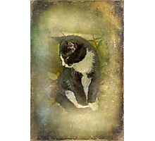 Tuxedo Cat Wearing Spats Photographic Print