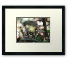Delicate Web Framed Print
