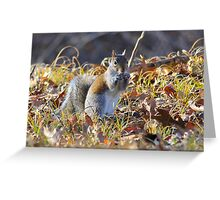 Nuts About You!! Greeting Card