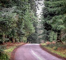 Ornamental drive at Rhinefield by SueKnight