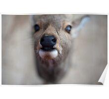 Deer Nose Poster