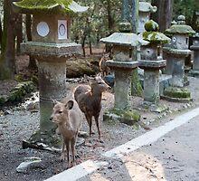 Kasuga Taisha Deer by photoeverywhere