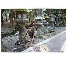 Kasuga Taisha Deer Poster