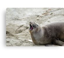yawning seal Canvas Print