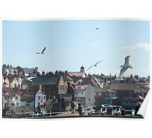 Seagulls at Whitby Poster
