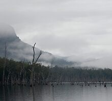 lake rowallan mist by photoeverywhere