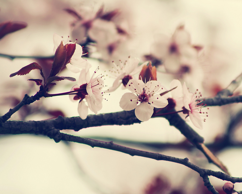 Soft side of Spring II by CarlaSophia