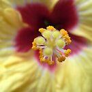 hibiscus VI by Floralynne