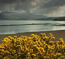 The Shore by Mawddach Photography