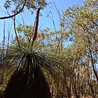 grass tree by jayview